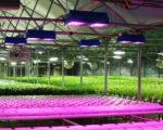 Семинар «Современные технологии освещения для выращивания агрокультур», 28 октября 2021 года